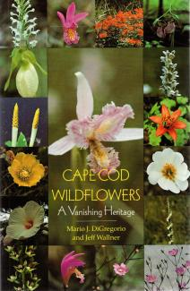 Cape Cod Wildflowers book cover