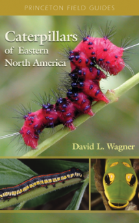 Caterpillars of Eastern North America book cover.