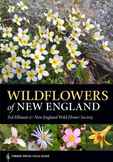 Wildflowers of New England