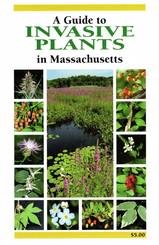 A Guide to Invasive Plants in Massachusetts book cover