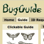 Bug Guide logo.